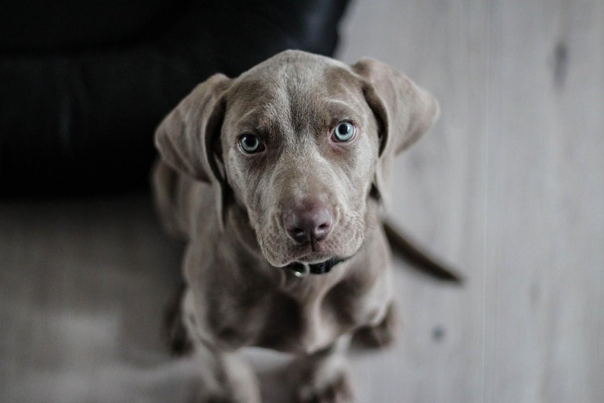 Köpeklerden insanlara geçen korona türü bulundu