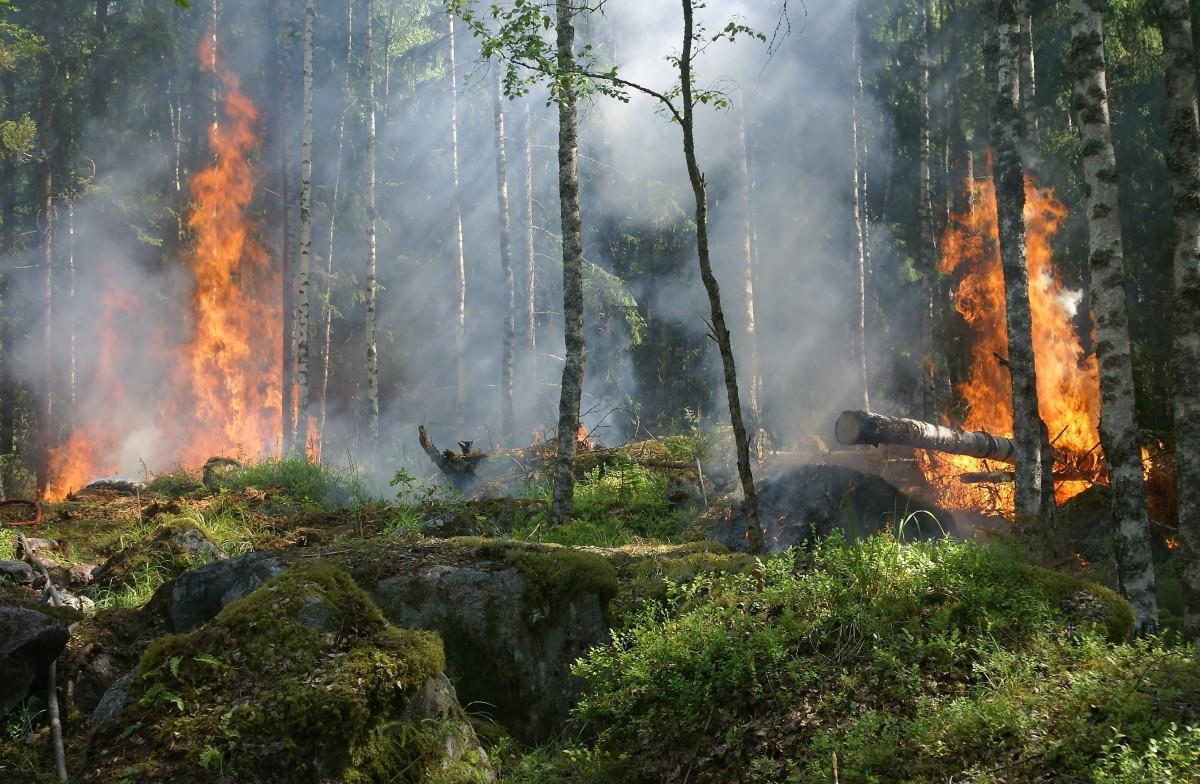 Manavgat Yangınında Ölenlerin Sayısı Üçe Yükseldi