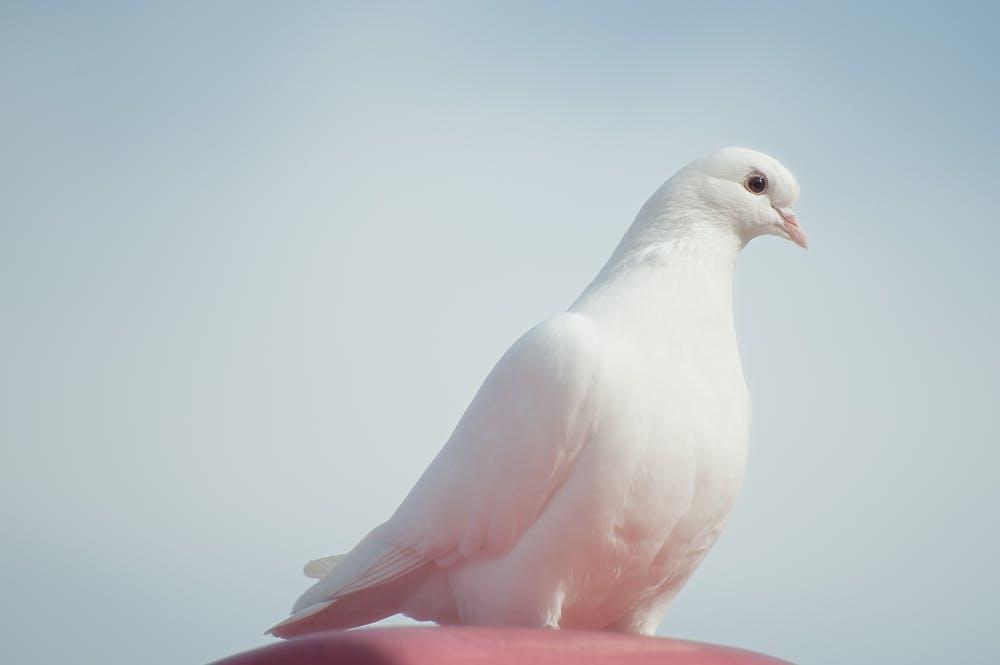 Tarihe Geçenler: 1 Eylül Dünya Barış Günü
