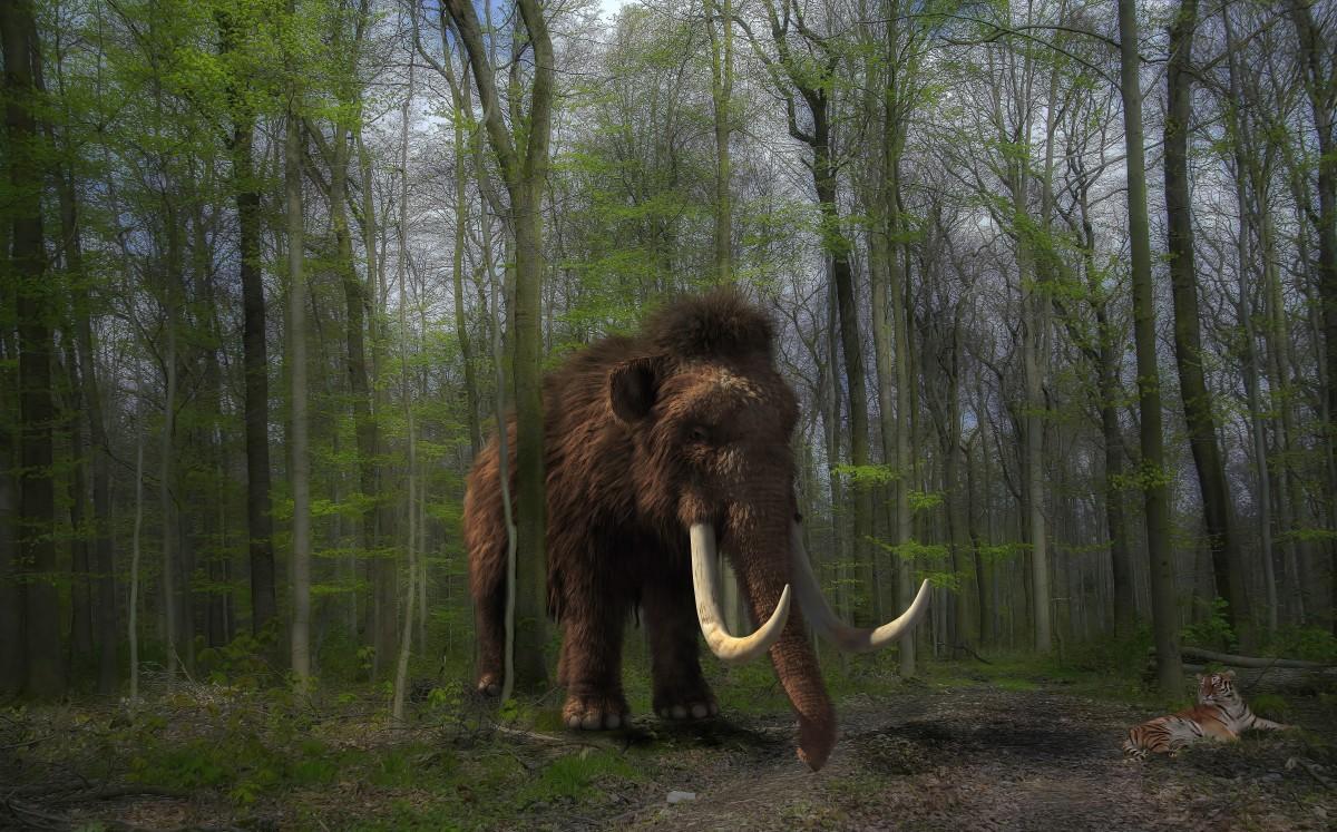 Soyu Tükenen Mamutlar Geri Mi Geliyor?